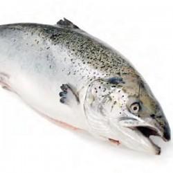 Fresh Whole Salmon - Farmed