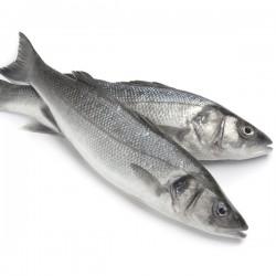 Sea Bass Farmed 400-600g