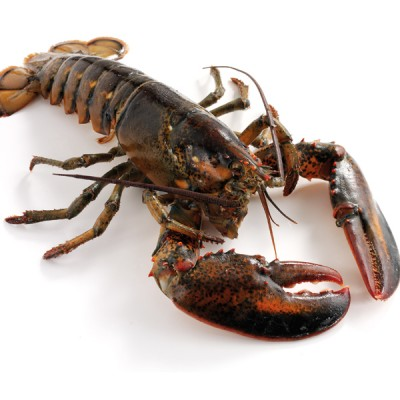 Lobster - Live Canadian 500-600g