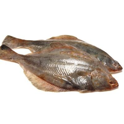 Flounders - Grs.wt