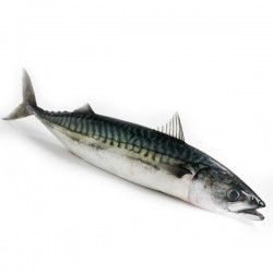 Mackerel - Fresh
