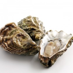 Oysters - Fresh (Live)