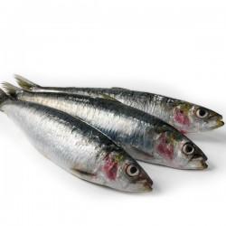 Sardines - Fresh Whole