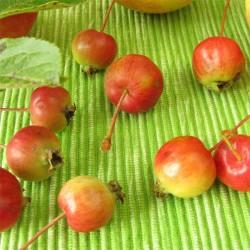 Cherry Apples 425g Tin